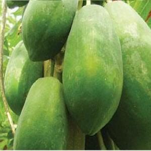 Unripe papaya
